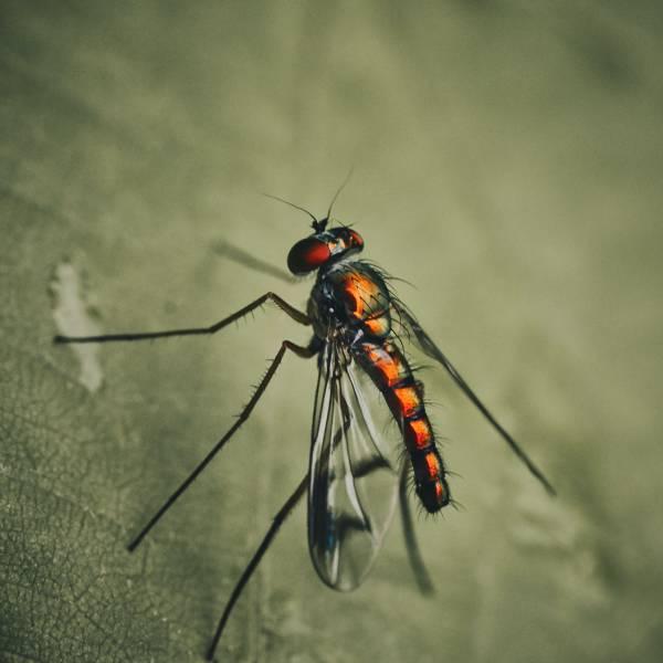 Los mosquitos en verano suponen una gran amenaza
